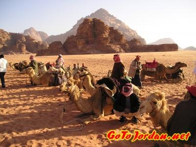 Погощики верблюдов в ожидании заработка